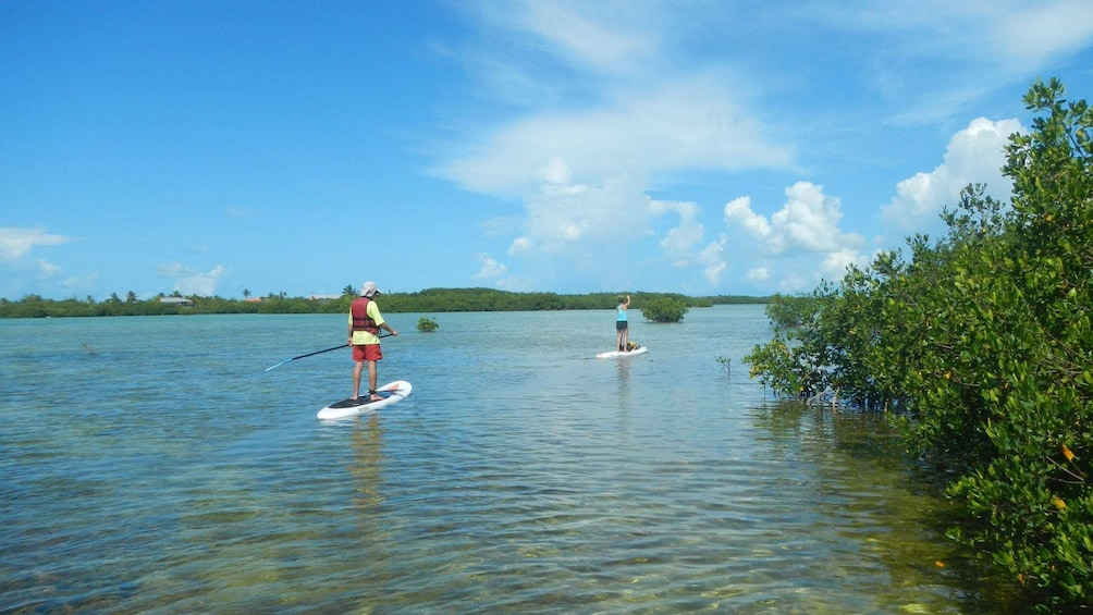 Show item 2 of 5. Paddle-boarders making their way down the waterway in Florida Keys