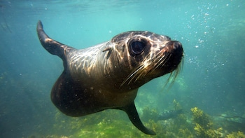 Private Kaikoura Swimming with Seals Experience