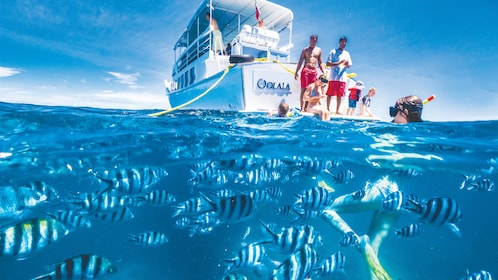 A woman snorkeling with fish next to Oolala boat
