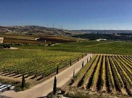 Visita guiada privada para los amantes del vino