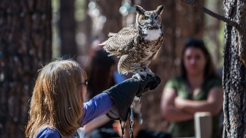 Animal handler with owl on her arm at Bearizona WIldlife Park