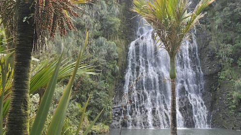 Waterfalls seen on the Wild West Coast and Waitakere Ranges Discovery Tour