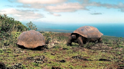 Turtles on the Isabela & Tintorera Day Tour
