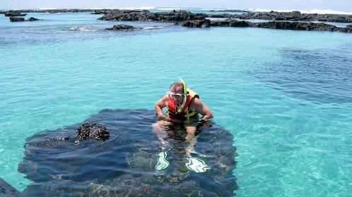 Man snorkeling on the Isabela & Tintorera Day Tour