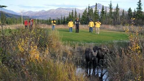 Tour group looking at animals in Denali National Park in Alaska