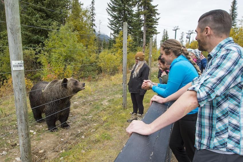 Full-Day Yoho National Park & Grizzly Bear Refuge Tour