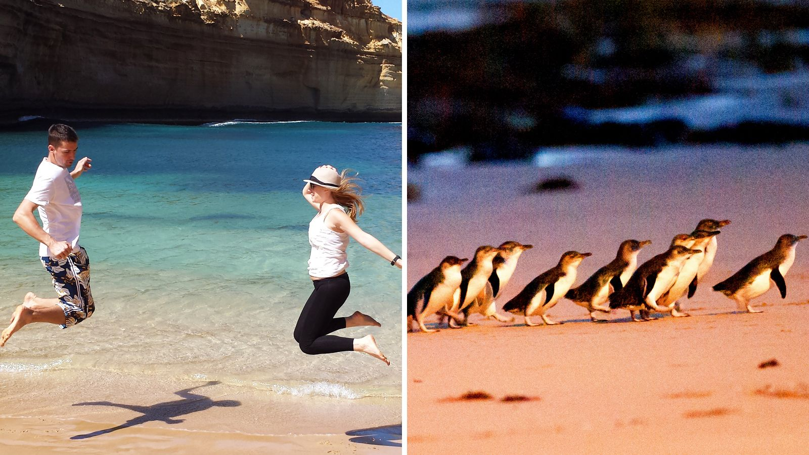 2 Tours Combo: Great Ocean Road & Phillip Island with Wheel & Zoo