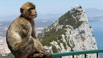 Excursión privada de 1 día a Gibraltar y Bolonia, desde Cádiz