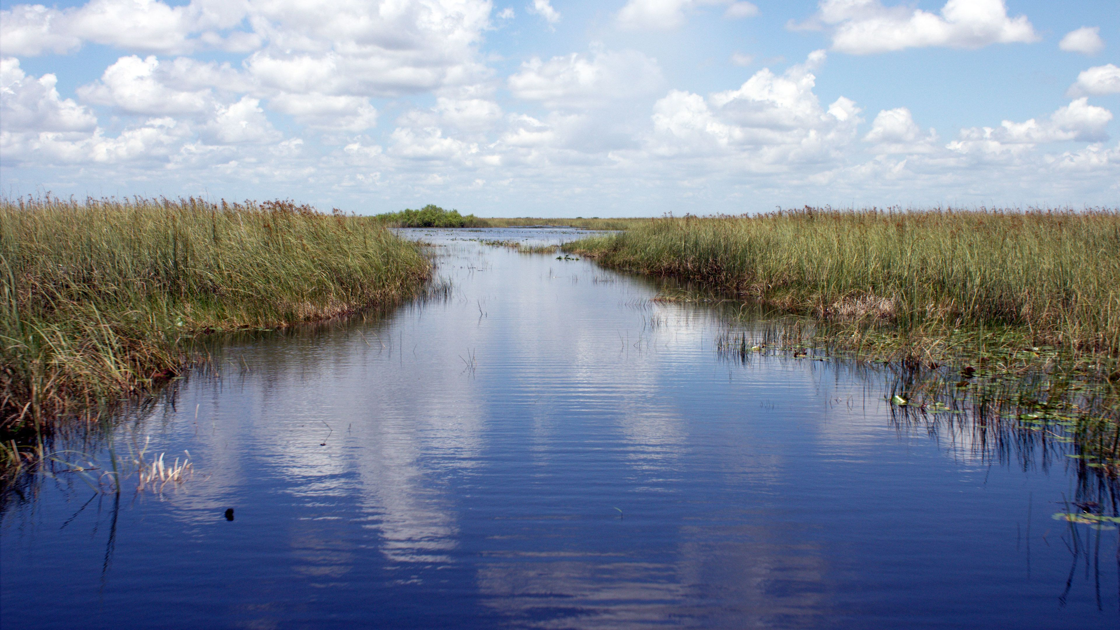 waterway with high grass in the Everglades