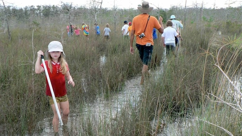 10,000 Islands and Swamp Walk in Florida