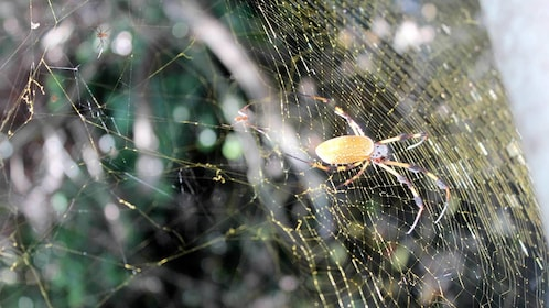 Spider web and spider in Florida