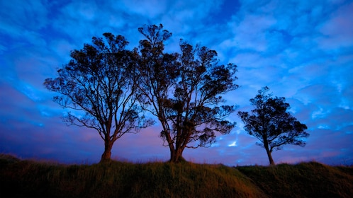 Silhouette of trees against the night sky on Mt Eden in Auckland