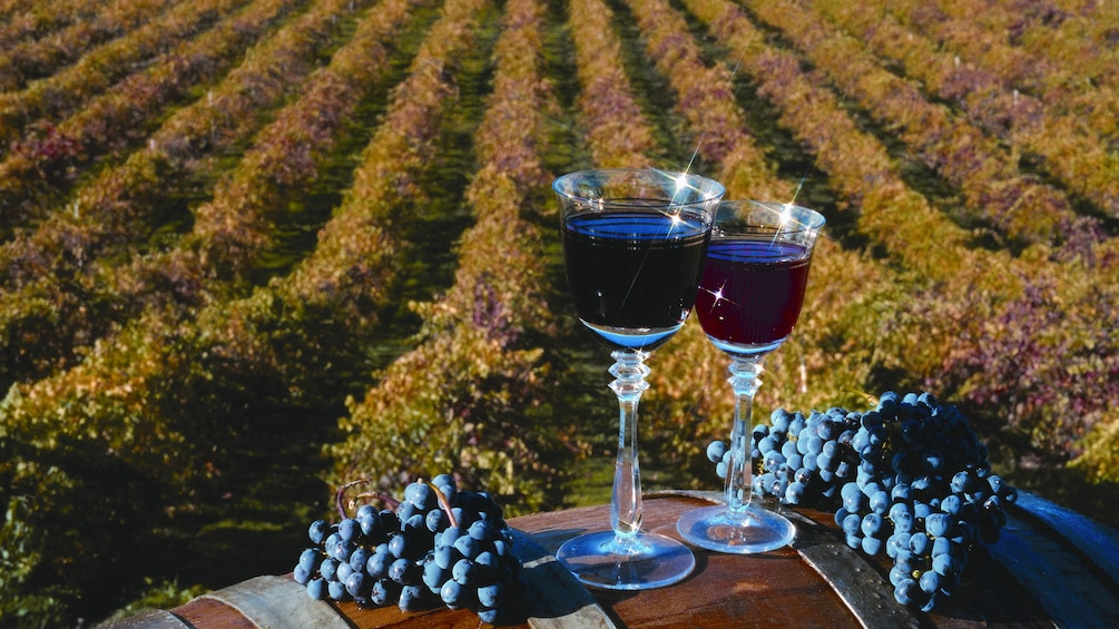 Glasses of red wine at a vineyard in San Francisco
