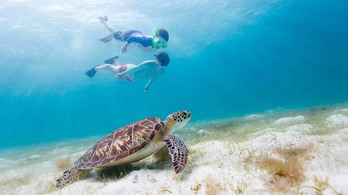 Two people snorkeling next to a sea turtle in St. Martin