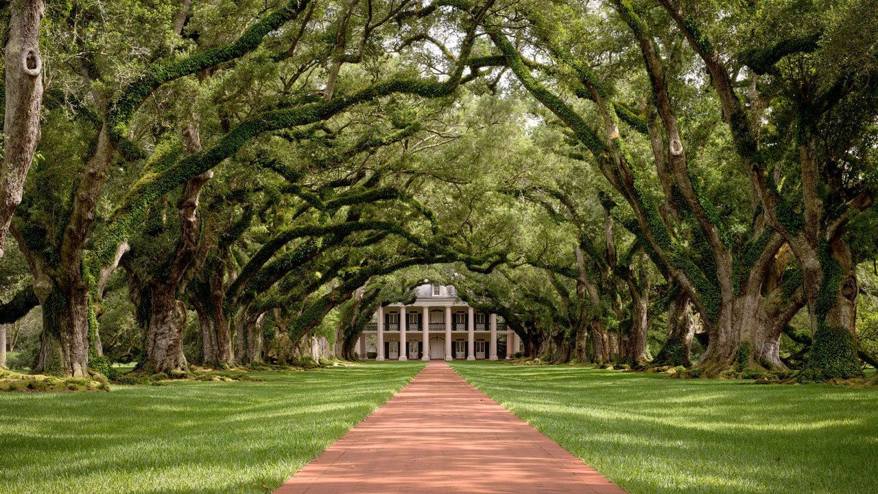 Path under a tree canopy at a plantation in New Orleans