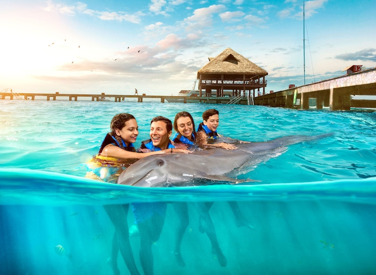 Show item 5 of 10. Isla Mujeres Dolphin Encounter with Lunch