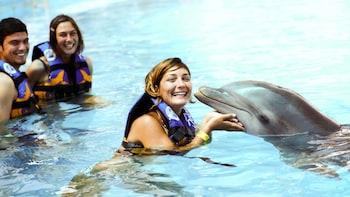 Encuentro con delfines en el parque acuático Aquaventuras Park