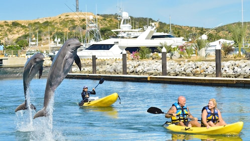 Dolphins jumps into air as kayakers watch at Dolphin Discovery Mexico