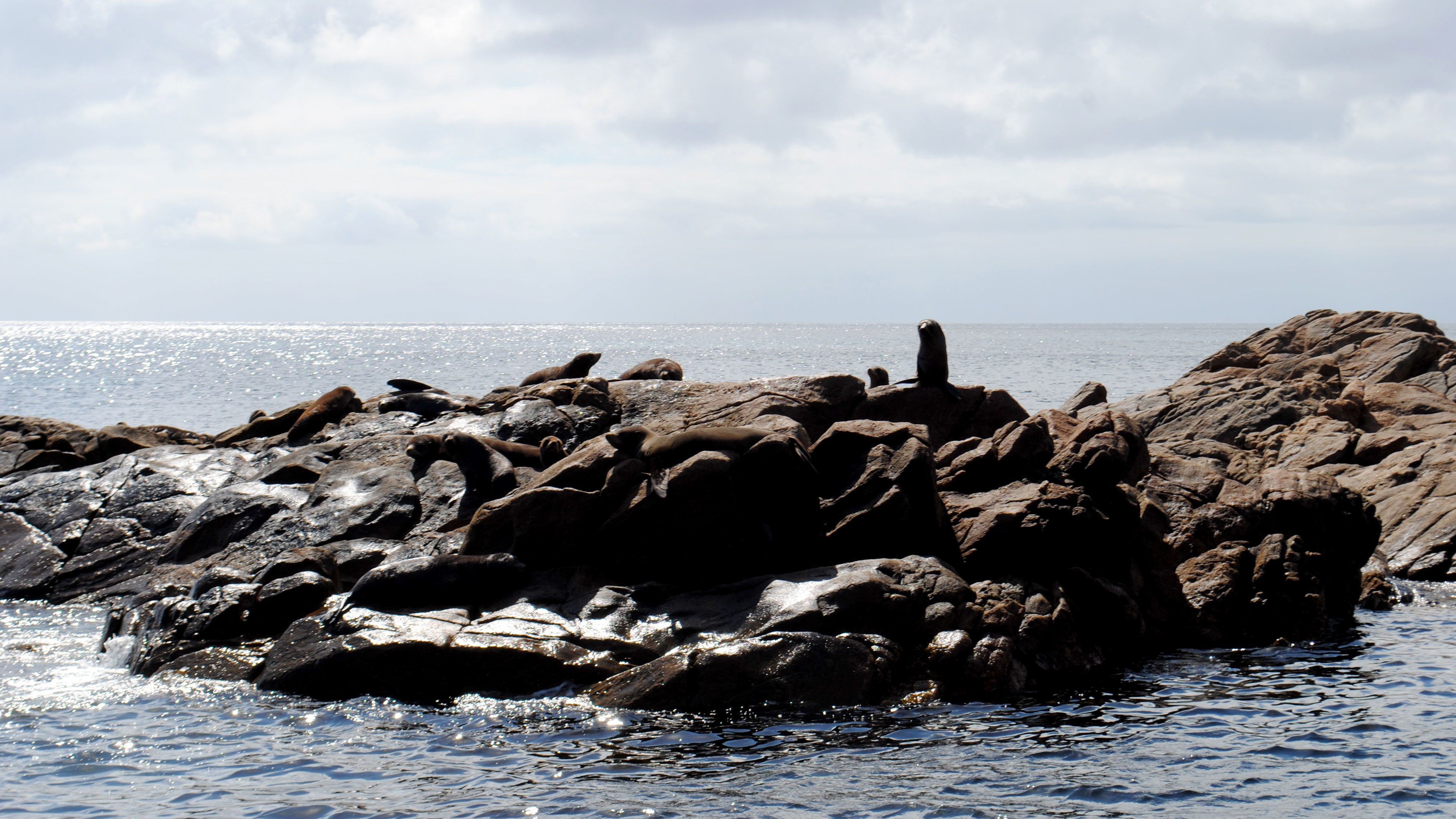 Seals on a rock in Perth