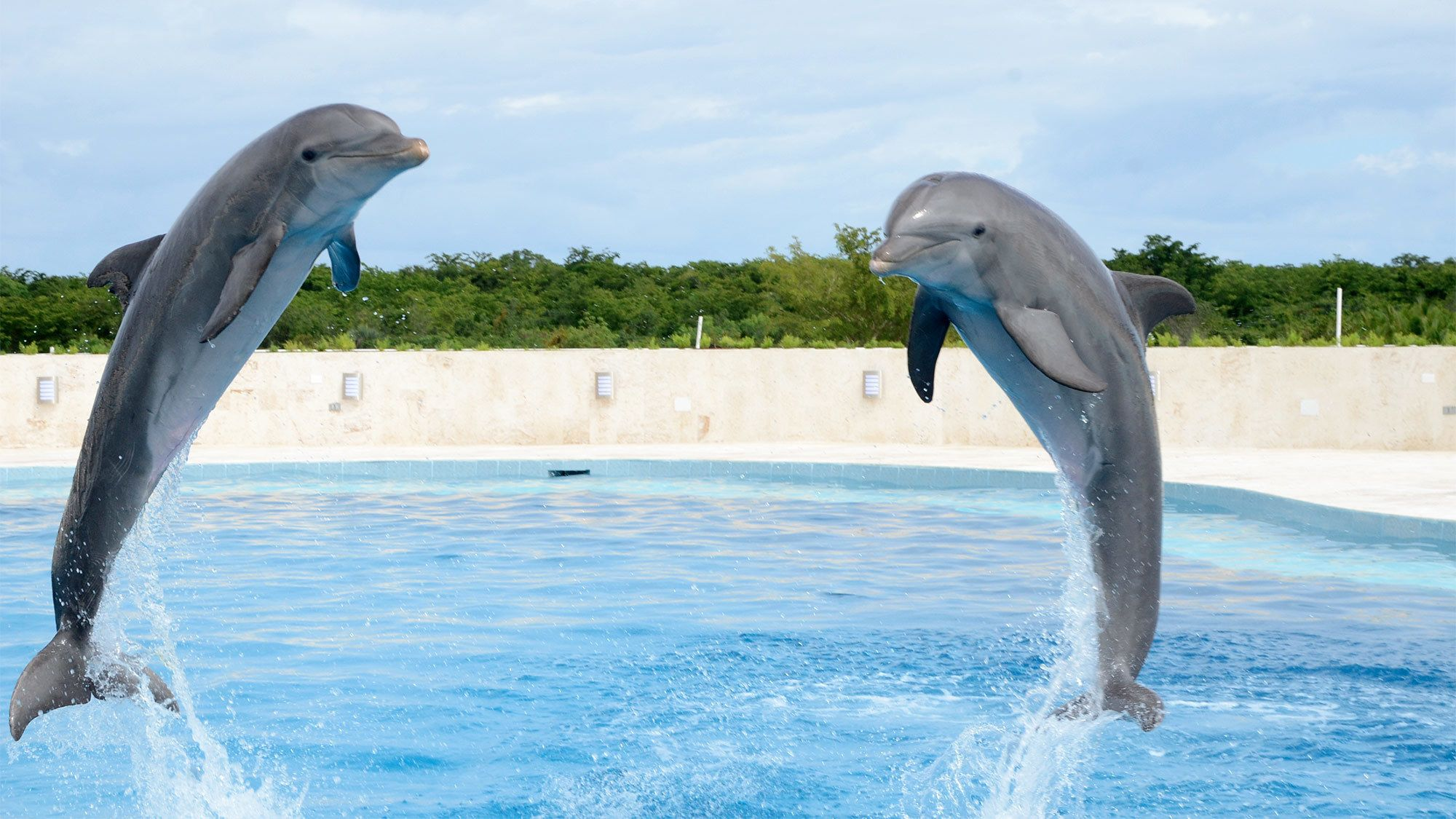 Two dolphins on the Dolphin Swim Adventure in Punta Cana