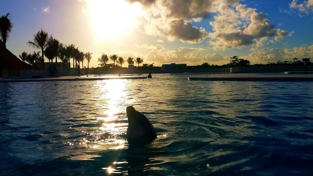 Dolphin Swim Adventure in Punta Cana