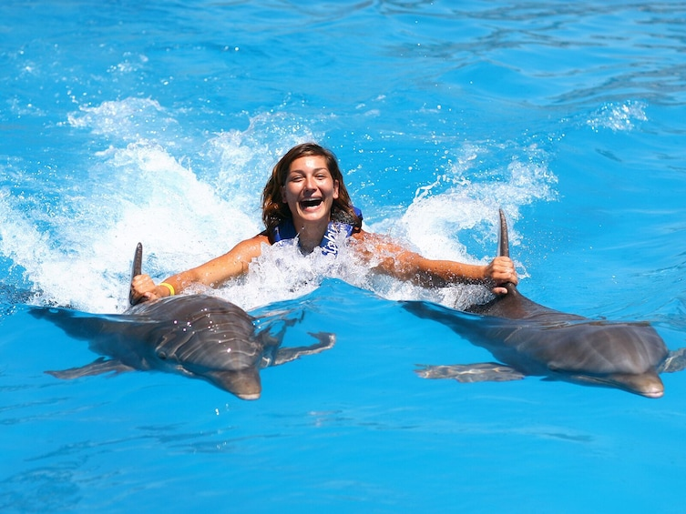 Show item 5 of 10. Dolphin Royal Swim in Punta Cana