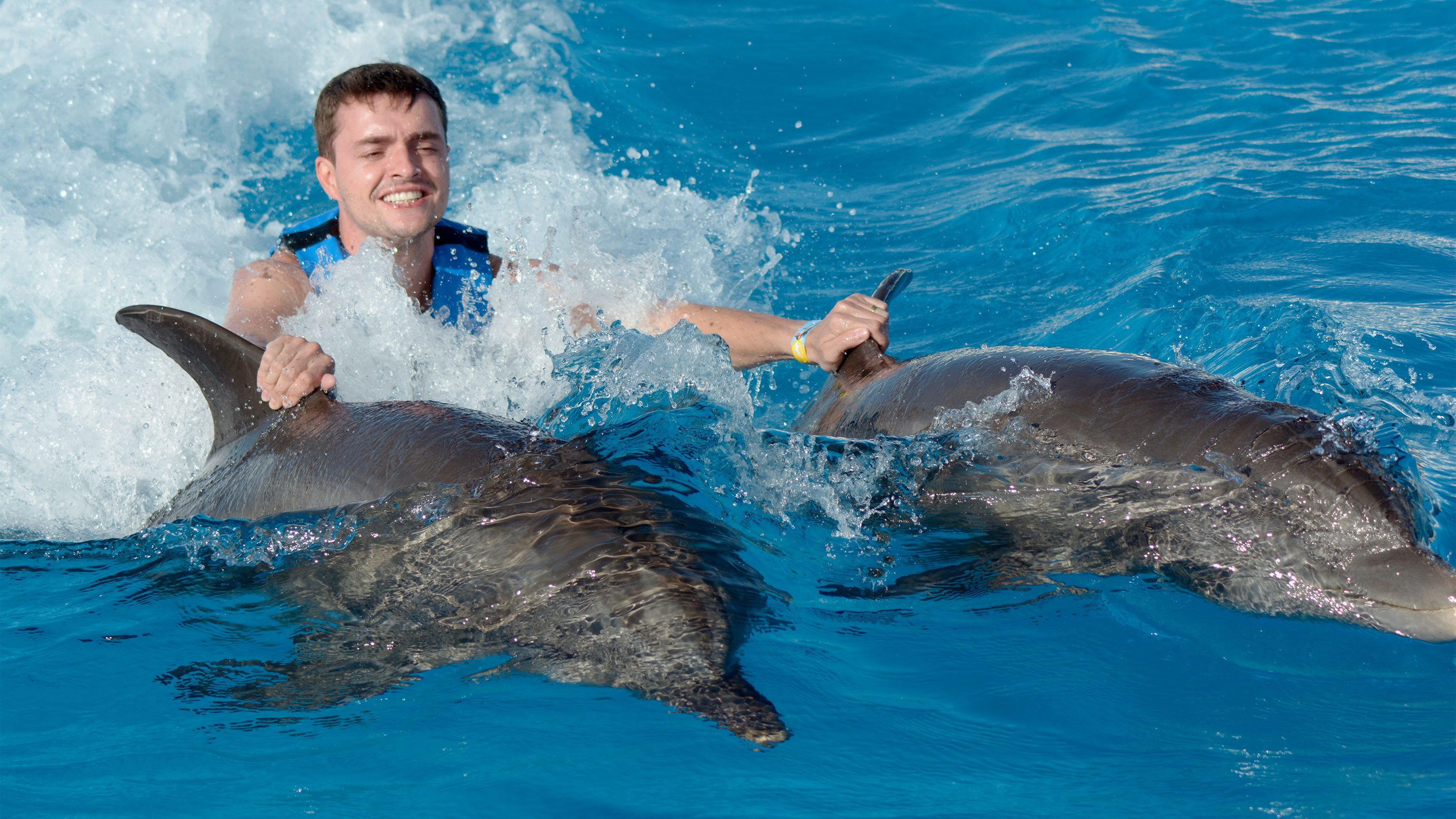 Man swimming with swimming with two dolphins in Punta Cana