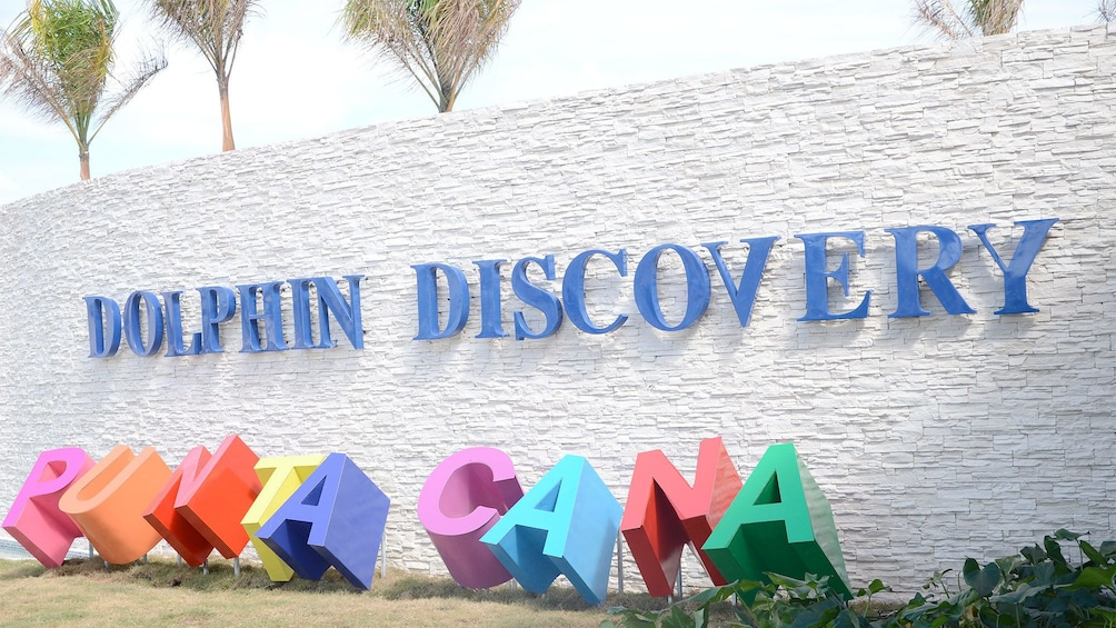 Show item 3 of 10. Dolphin Discovery in Punta Cana