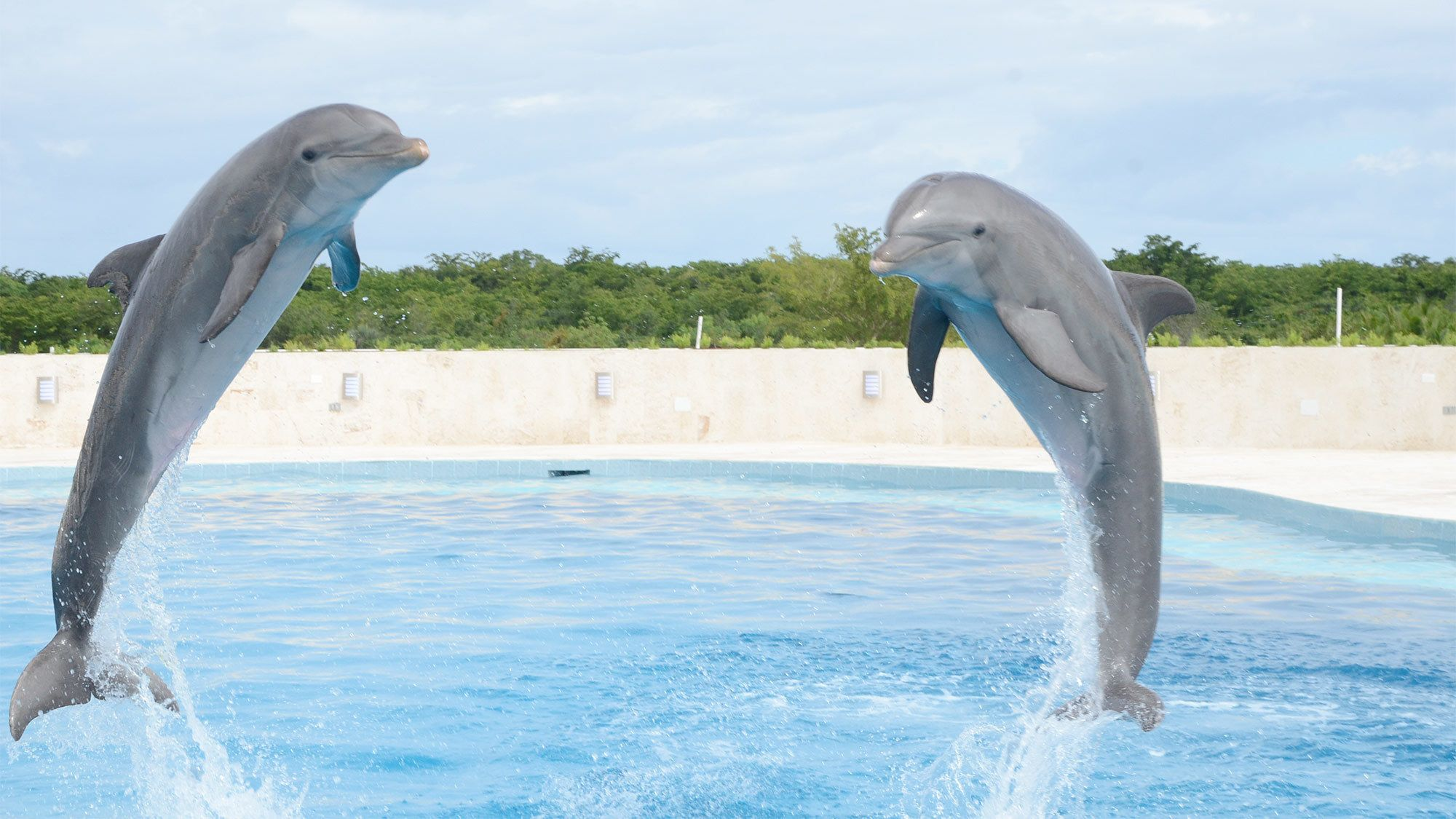 Two dolphins jumping out of the water in Punta Cana