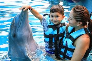 Encontro com golfinho