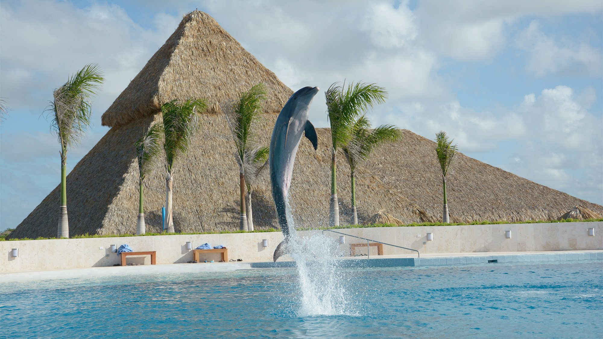 View of the Dolphin Discovery tour in Punta Cana