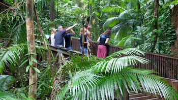Full Day Daintree Rainforest Experience - 7:20am