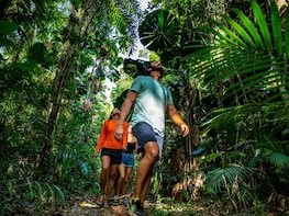 Full Day Daintree Rainforest Tour - only 11 guests - 7:20am