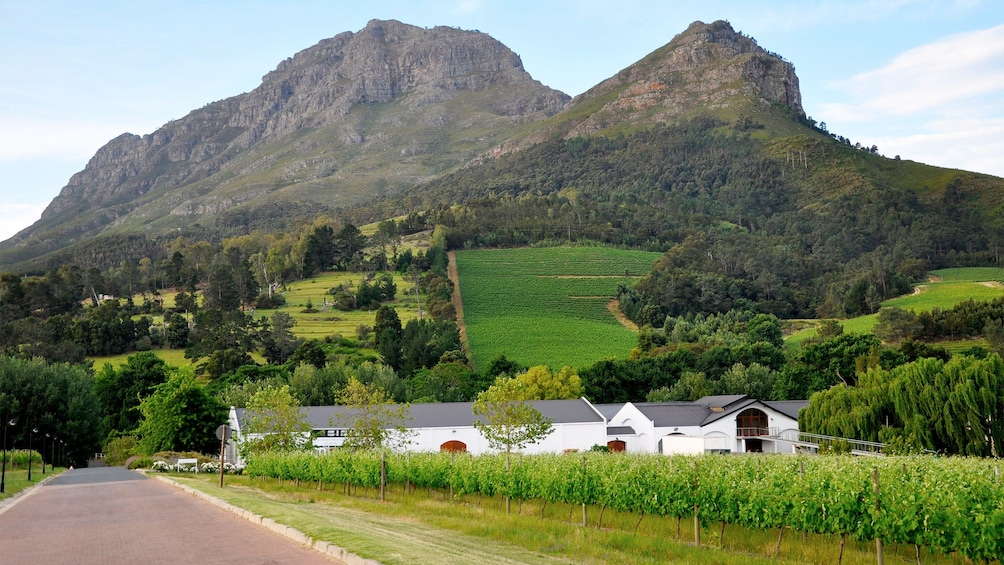 Apri foto 1 di 5. Beautiful views on the winelands day tour in Cape Town, South Africa