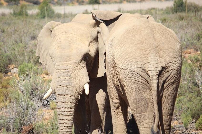 Apri foto 5 di 9. Big 5 Safari with Lunch at Aquila Private Game Reserve