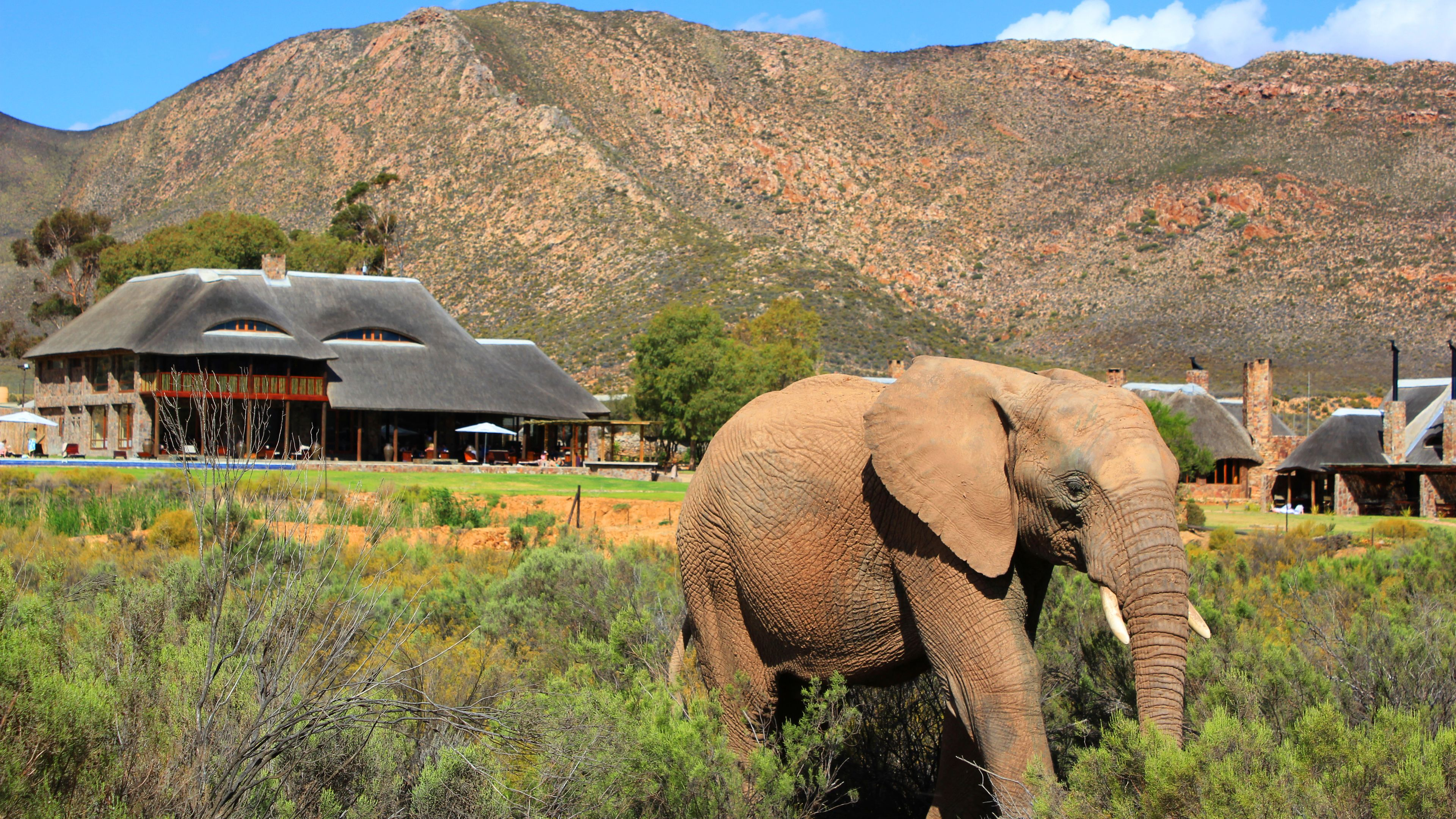 Big 5 Safari with Lunch at Aquila Private Game Reserve