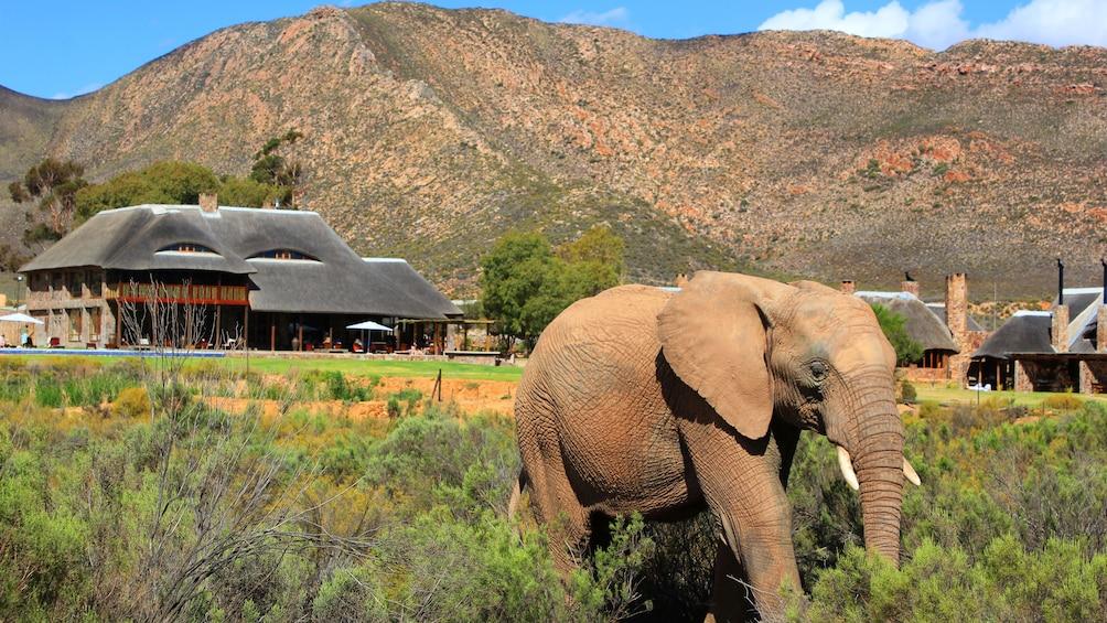 Apri foto 1 di 9. Elephant in a Safari compound
