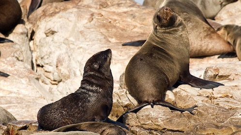 Sea lions on a rock in Cape Town