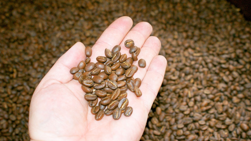 Carregar foto 1 de 5. Coffee beans on the Coffee Tasting tour in Bogota