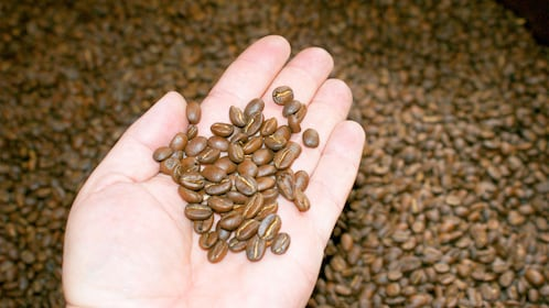 Coffee beans on the Coffee Tasting tour in Bogota