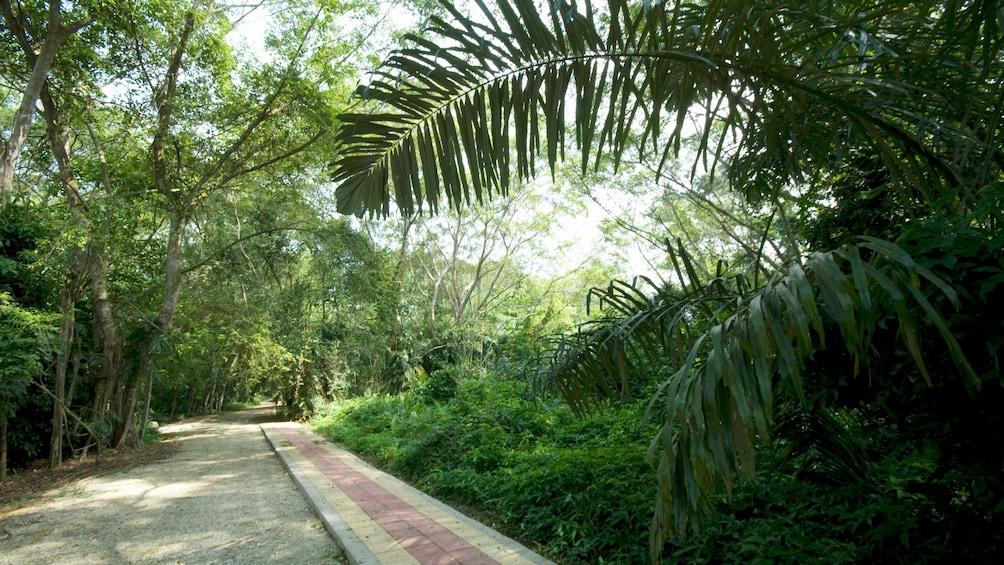Show item 3 of 7. Smooth trail borderline by greenery in National Botanic garden in Malaysia