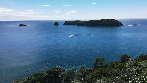 Marine Reserve Coromadel Tui Tours.JPG