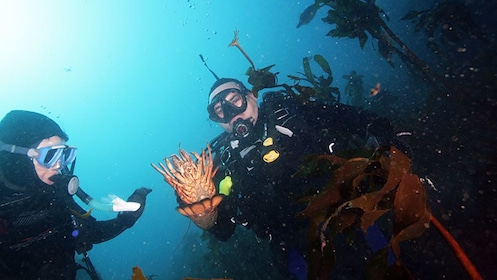 Divers collecting crayfish in New Zealand