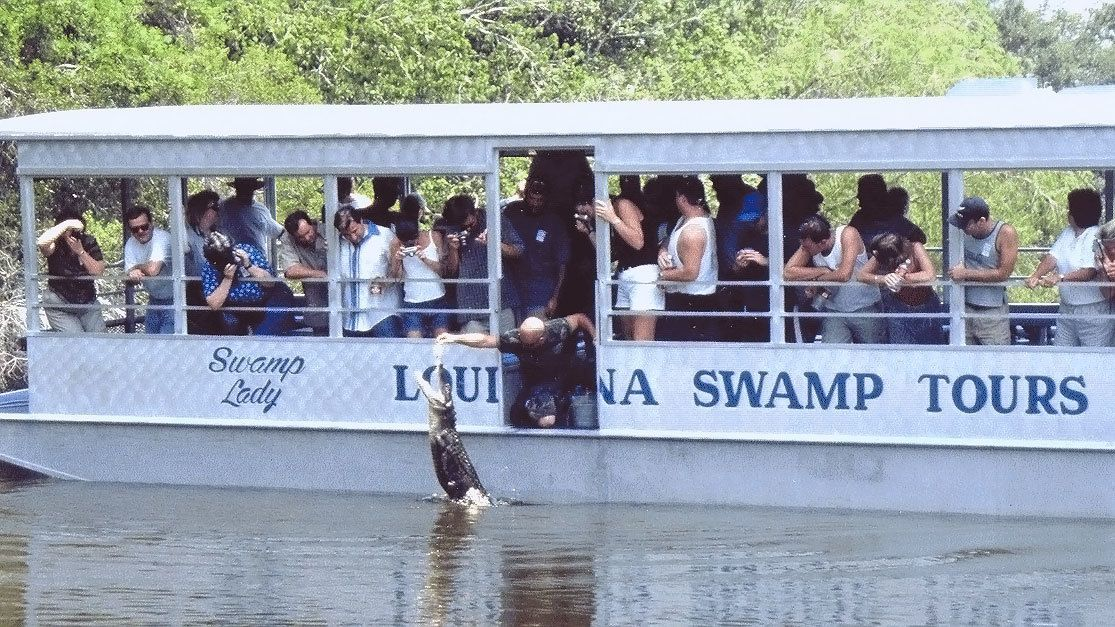 Tourist watching tour guide feed alligators from side of tour boat in New Orleans.
