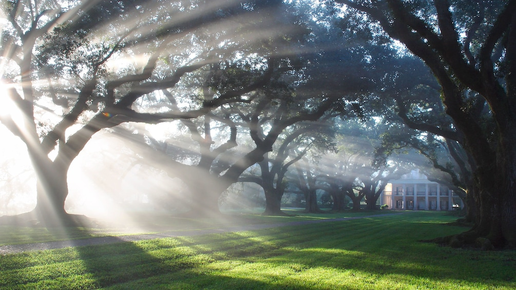 Show item 1 of 9. Morning sun shining through trees on estate grounds with fog in Oak Alley, New Orleans.