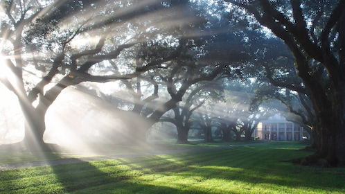 Morning sun shining through trees on estate grounds with fog in Oak Alley, New Orleans.