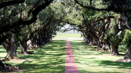 Estate grounds with red brick walkway to road and large trees flanking either side in Oak Alley, New Orleans.