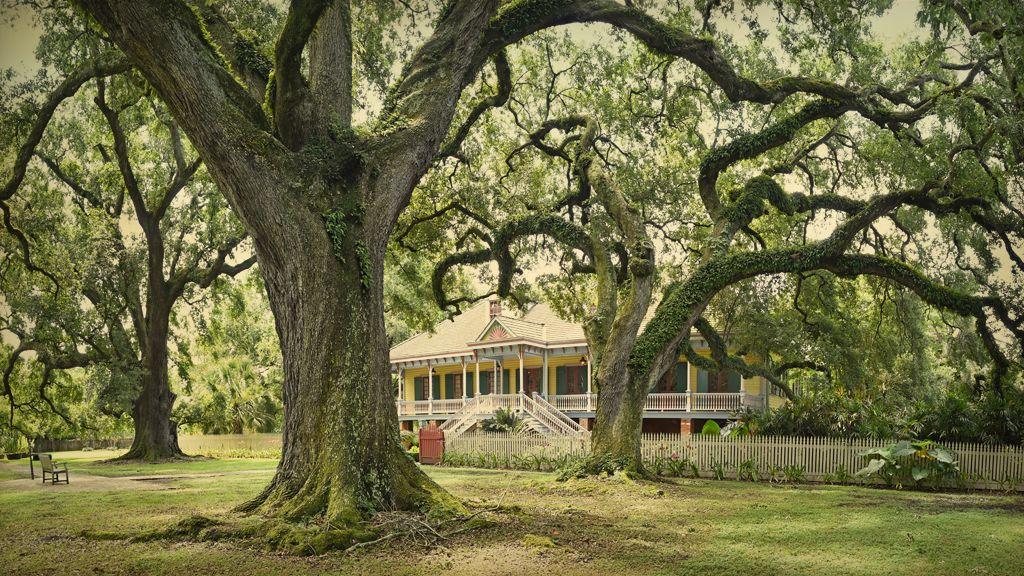 Laura Plantation Tour