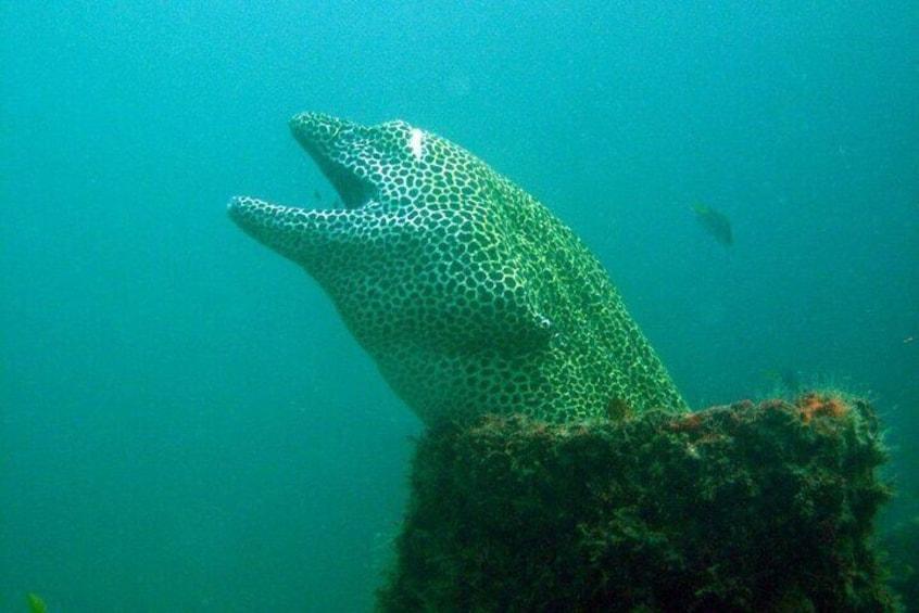 Scuba Diving Experience at Arabian and Oman Sea