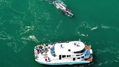 Aerial view of a Whale approaching a boat